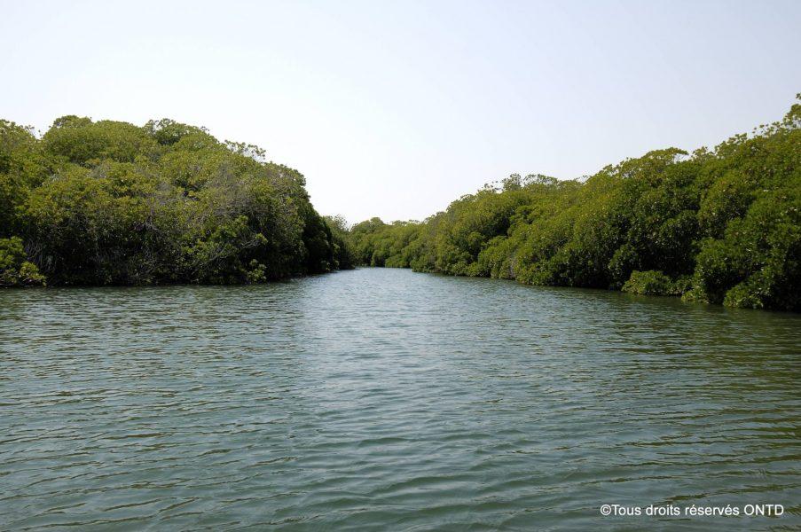 Cammp touristique de Godoria+Mangrove
